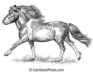 hand, galopperande, avbild, teckning, ponny