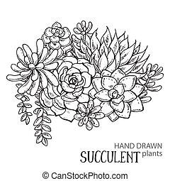 hand, getrokken, succulent, plants.