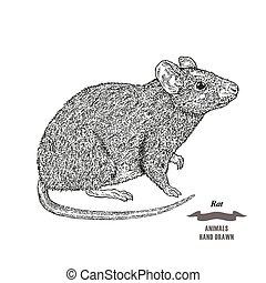 stich skizze oder hase abbildung hand hintergrund rabbit vektor schwarzwald tier. Black Bedroom Furniture Sets. Home Design Ideas