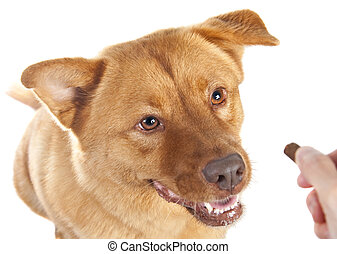 Hand giving treat to dog on white background