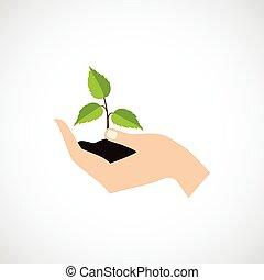 hand, halten, schützen, pflanze