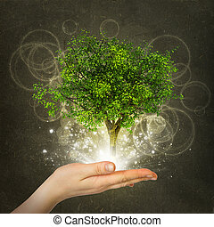 Hand hold magical green tree and rays of light