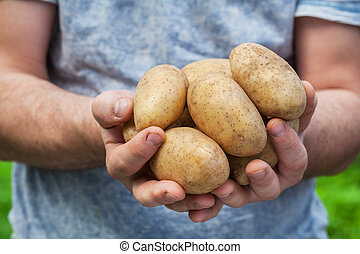 Hand hold potato on natural green background