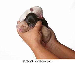 3 Newborn Puppies Sleeping