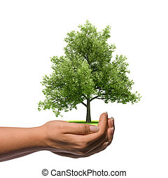 Hand holding a big tree