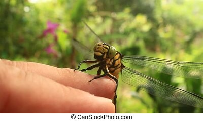 Hand holding a dragonfly