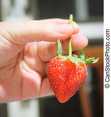 Hand Holding A Fresh and Sweet Strawberry