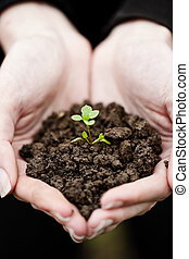 Hand holding a fresh young plant. Symbol of new life and environmental conservation.