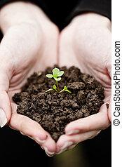 hand holding, a, frisch, junger, plant., symbol, von, neues leben, und, umwelt, conservation.