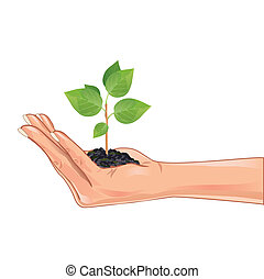 Hand holding a green plant, isolated on white background, element eco design. Vector illustration