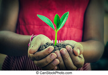 hand holding a green young plant