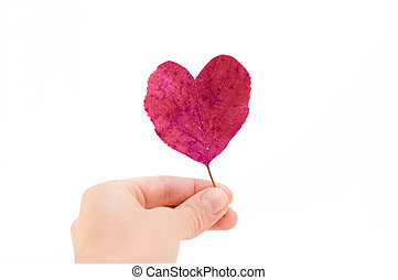 Hand holding a leaf isolated