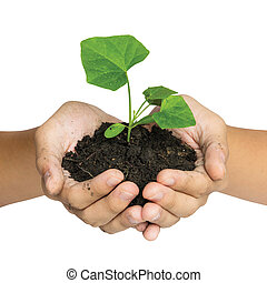 Hand holding a tree for giving life to the Earth isolated over white background