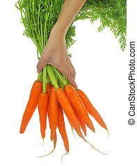 Hand holding carrots with leaves isolated on white