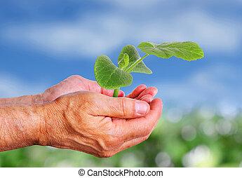 Hand holding cucumber seedling