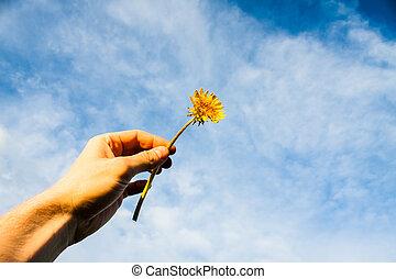 Hand Holding Dandelion Flower Against Blue Sky