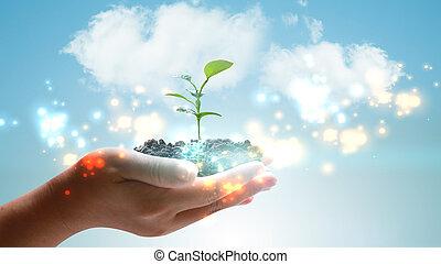 hand holding, grünpflanze, wachsen, ., umweltsmäßig freundlich, begriff