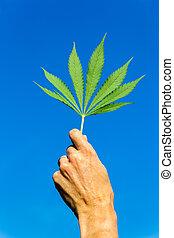 Hand holding green hemp leaf in blue sky