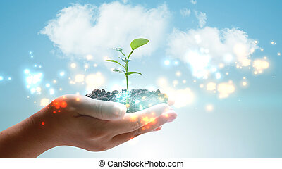 Hand holding green plant growing . Environmentally friendly concept
