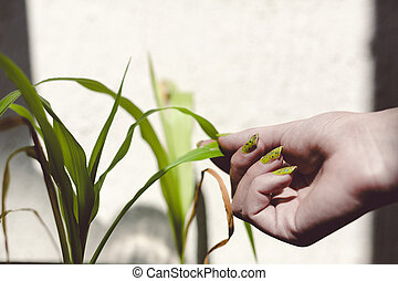 hand holding green plant