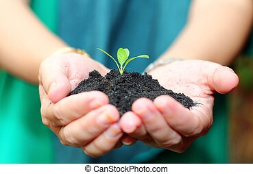 hand holding green plant with black soil on palm. Growth concept background.