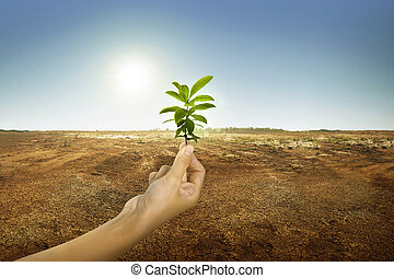 Hand holding green plant with sunlight