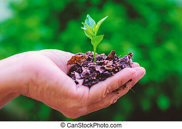 Hand holding green small plant