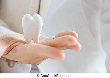hand holding molar