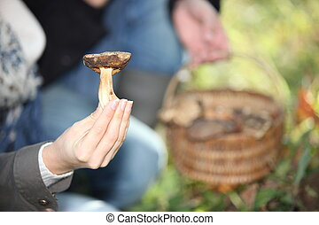 hand holding mushrooms
