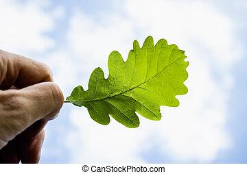 Hand Holding Oak Leaf against Blue Sky
