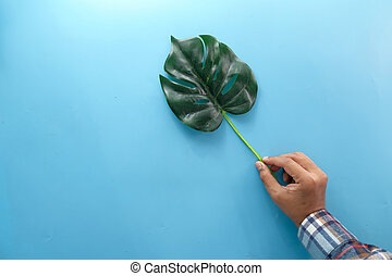 hand holding palm leaf on on blue background