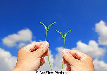 hand holding, pflanze, grün, energie, begriff