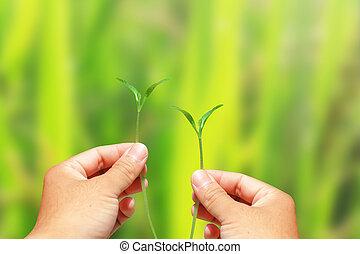 hand holding, pflanze, grün, energie, concept.