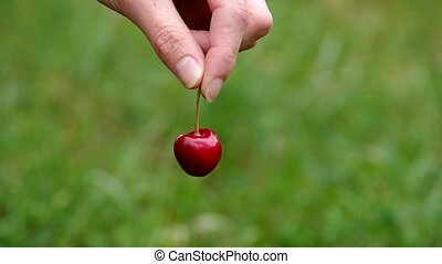 Hand holding red cherry on a green background