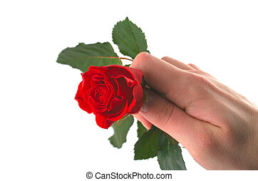 hand holding red rose #2
