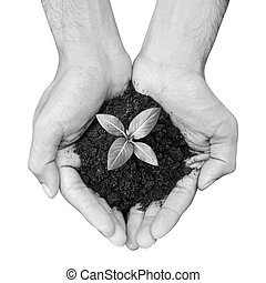 Hand holding sapling with soil - Hand holding seedling with...