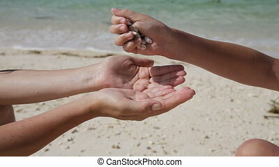 Hand holding seashells on the beach - child hand pours in...