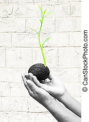 Hand holding seed is growing a new life on white wall background