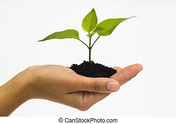 Hand holding seedling