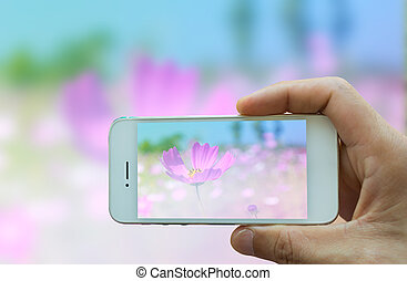 Hand holding smart phone with garden flower blur background