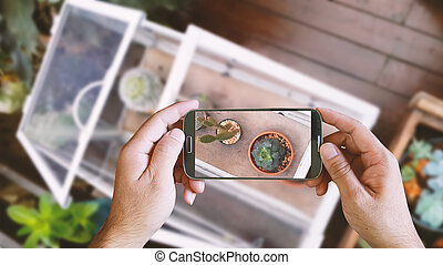 Hand holding smartphone taking photo of cactus in   little glass house. from above,topview