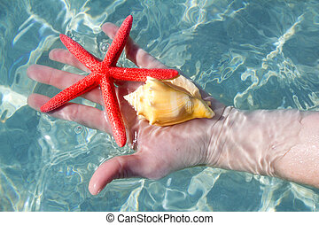 Hand holding starfish and seashell in tropical water