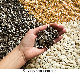 Hand holding sunflower seeds against sesame, sunflower and pumpkin seeds background. Healthy food.