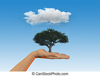 Hand holding tree under a rain cloud