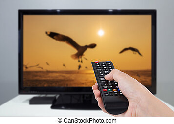 Hand holding TV remote control with a television and bird screen in background