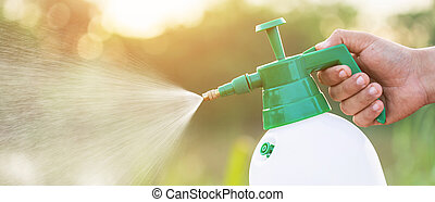 Hand holding watering can and sprayign to young plant in garden