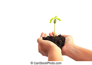 Hand holding young plant with soil isolated on white background