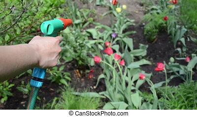hand hose flower water - Hand of gardener holding the garden...