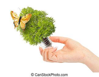 hand, houden, groen boom, in, gloeilamp