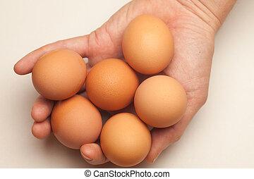 hand houdend, zes, eitjes